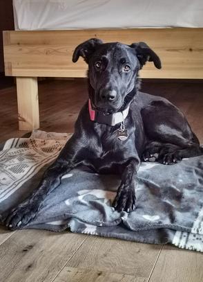 Urlaub mit Hund Bayern Hundefreundliche Hotels Urlaub mit Hund Bergurlaub mit Hund