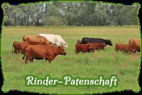 Rinder-Patenschaft | Mein BioRind