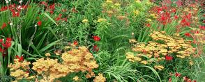 Bepflanzung von gArten und Stein Bremen und Sulingen
