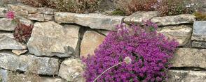 Trockenmauern von gArten und Stein Bremen