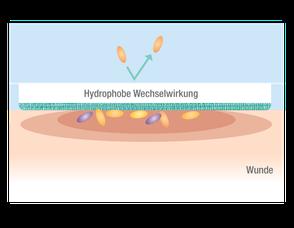 Zweites Foto: Darstellung der Hydrophoben Wechselwirkung des Cutimed Sorbion Sorbact
