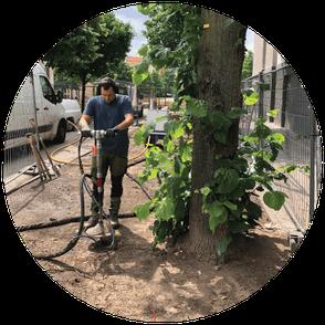 Bodenbelüftung_Baum