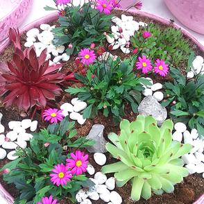 Topf- & Zimmerpflanzen