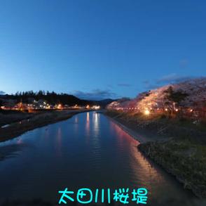 太田川桜堤
