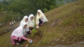 植林活動を通じてさまざまな木の種類を学んでいます