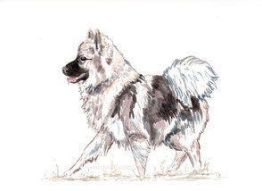 Aquarell, Kunst, watercolour, Wolfsspitz, Bayreuth, Illustration