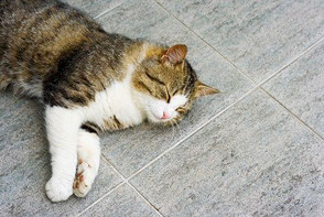 Brown and white cat sleeping on a grey tile floor.