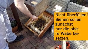 #Bienenschauvolk einrichten #Kunstschwarm