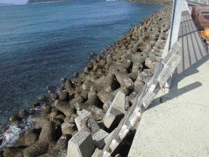 沈み瀬にはアオリイカが居ついています