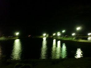 夜間は常夜灯の灯りにアオリイカが集まってくる
