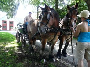 Familienurlaub in der Eifel mit Kutsche
