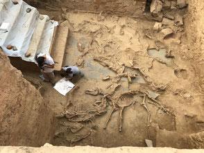 Restos de caballos hallados en el santuario tartésico del Turuñuelo (Badajoz)./ IAM-CSIC
