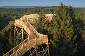 Steig über den Baumwipfeln am Baumkronenweg in Kopfing