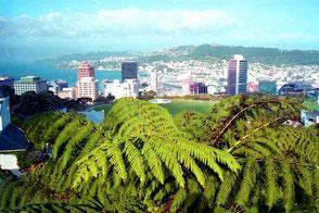 Blick vom Mt. Victoria-Hill hinunter auf Wellington