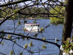 Boot auf der Alster durch die Zweige eines Baums aufgenommen