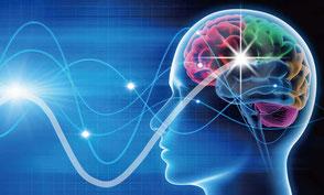 嗅覚は脳の大脳辺縁系と直接結びついているといわれています。
