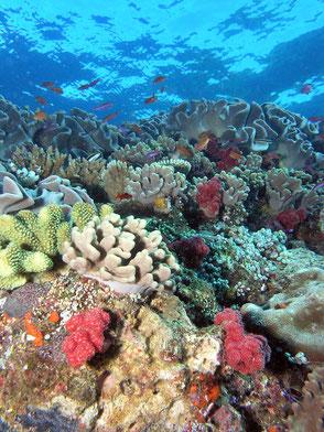 生態系の崩壊が懸念される熱帯フィジーの珊瑚礁 NOAA/ CC BY 2.0