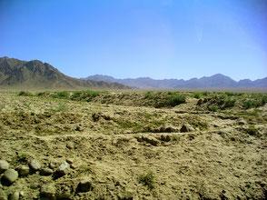 Leopardgecko Wüste Steppe