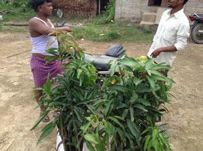 苗木の購入