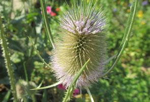 Insekten tummeln sich auf den Blüten