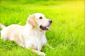 Cutivet Hund auf einer Wiese