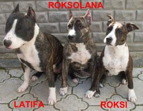 ROKSI & ROKSOLANA DIVA