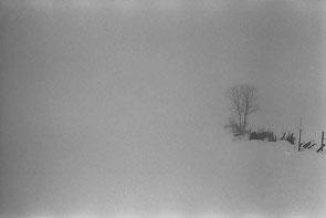 jeromedevismes_montagne_neige_isolement_arbre