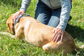 Cranio sacrale Behandlung beim Hund