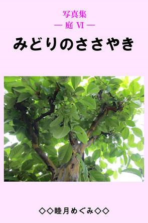 写真集 ― 庭 Ⅵ ― みどりのささやき 睦月めぐみ