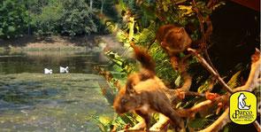 OmoGirando le Sorgenti del Volturno ed il Centro Visita della Fauna Appenninica