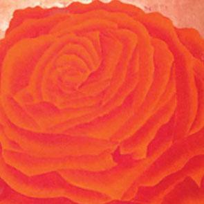 Rosengemälde BEAUTIFUL DREAM, Öl und Blattkupfer auf Leinwand 65 x 65 cm Pia Phoenix