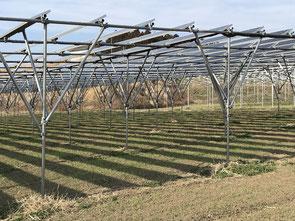 アグリツリー|ソーラーシェアリング