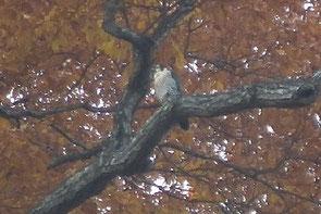 ・2011年11月29日 仙台・青葉山公園