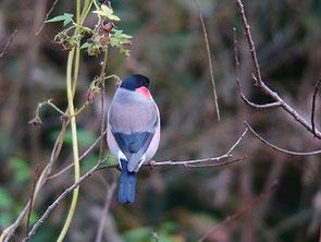 ・2006年11月23日 秋ケ瀬公園   ・きれいな背中の個体だった。