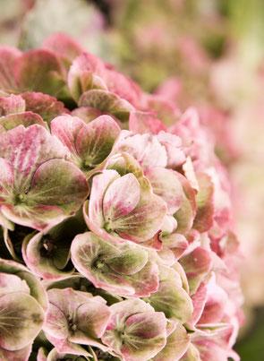 Herbstkranz, Naturkranz, Hortensienkranz, Rosengarten NaturkulturKranzbinden Naturworkshop, Blumenworkshop