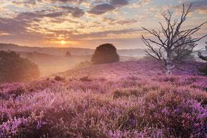 www.ronaldosephius.nl Heide zon boom Bewust Groeien vanuit innerlijke kracht