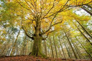 www.ronaldosephius.nl grote boom dunnen bomen rondom in bloei Bewust Groeien vanuit innerlijke kracht