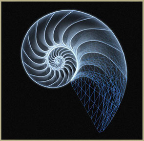 www.ronaldosephius.nl Nautilus Guldenregel Bewust Groeien vanuit innerlijke kracht