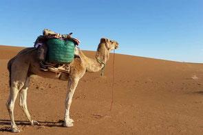 Wüstentrekking Marokko - Praxis für Naturheilkunde und Tibetische Medizin Baden