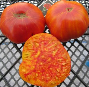 "Tomatensorte ""Mammoth German Gold"""