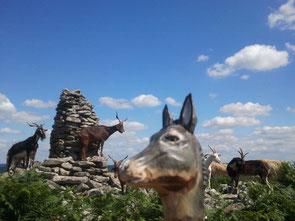 Une rando avec un âne en Limousin : le lac de Vassivière