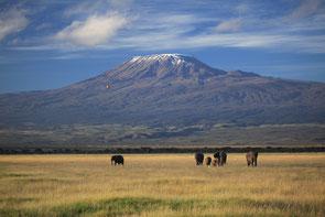 散 歩(ケニア、アンボセリ国立公園) (全紙)