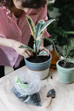 Contrat d'entretien des plantes du bureau à Paris
