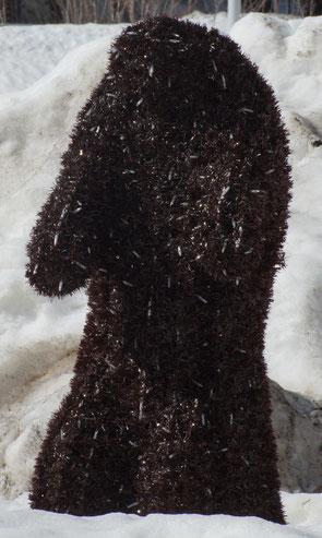 Marmotte originale à Bonneval-sur-Arc.