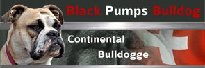 Continental Bulldog Zucht Black Pumps