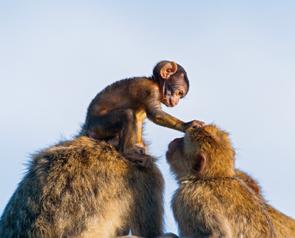 Affenbaby in der Gruppe