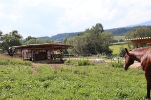 Einsteller, Einstellbetrieb, Einstellboxen, Einstellplätze, Paddock-Boxen, Offenstall, Bewegungsstall Graz/Deutchlandsberg/Steiermark