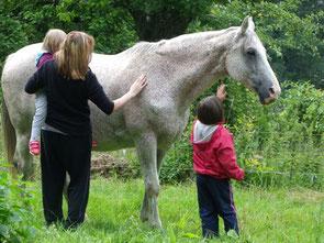 Reittherapie im Odenwald, Wellenreiter, Lampenhain, tiergestützte Therapie