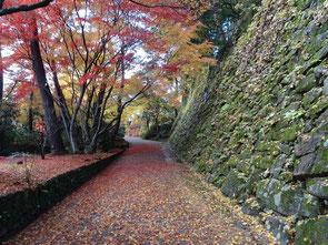 秋の丹波亀山城跡