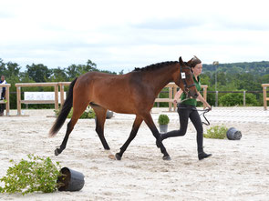 Feel Good Dance, femelle New-Forest par Mikel (NL) et Quelly Pearl (par Willoway Piper's Bay)